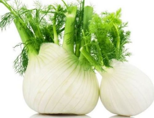 Fennel to Prevent Bone Loss